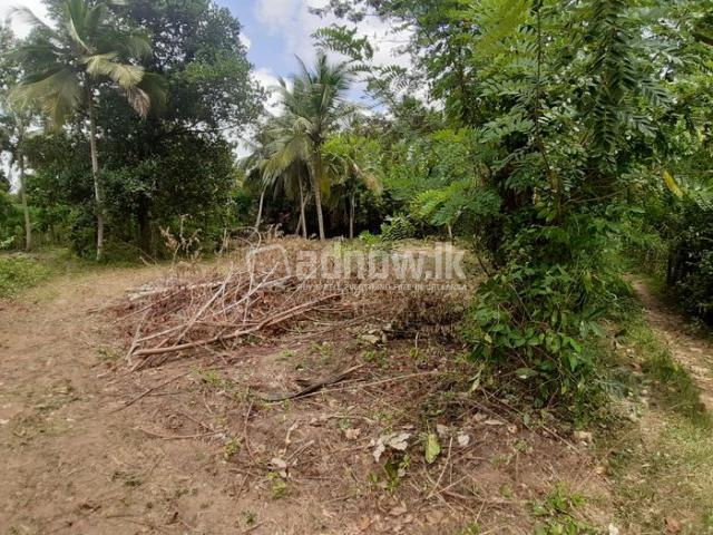 Land For Sale Thambagalla - Chilaw - 2/5