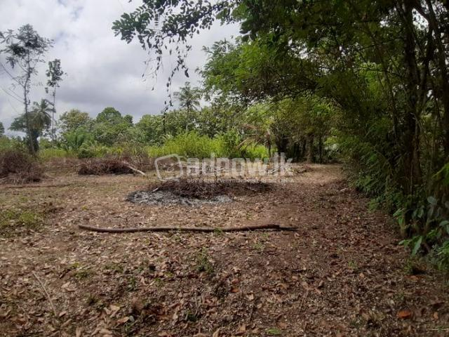 Land For Sale Thambagalla - Chilaw - 3/5