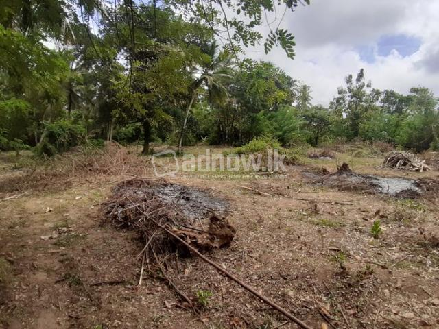 Land For Sale Thambagalla - Chilaw - 5/5